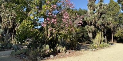 The cactus garden.