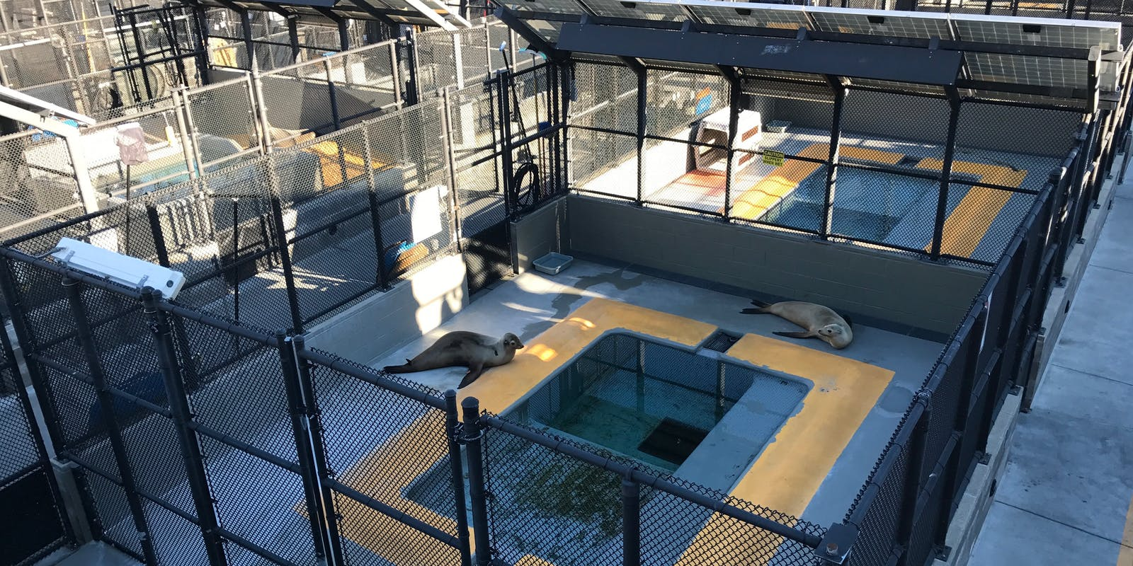Some patients at the Marine Mammal Center.
