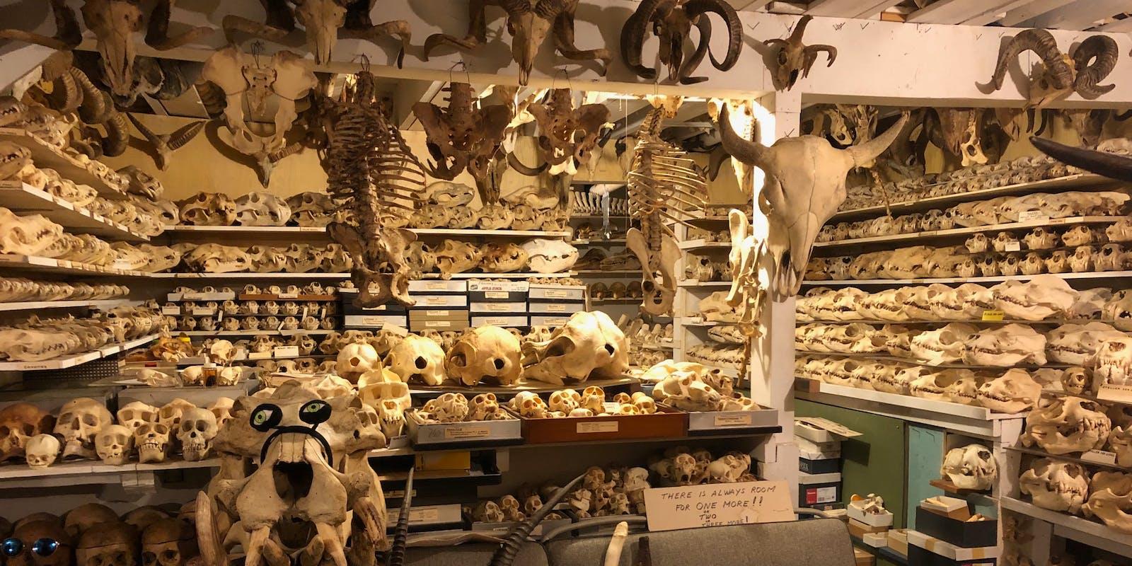 The basement full of skulls