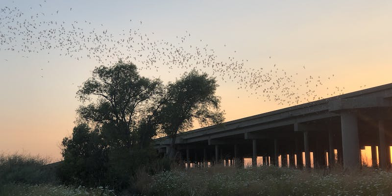 A ribbon of bats emerging from the causeway.